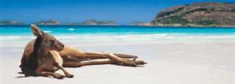 SetWidth960-Kangaroo-on-the-beach-Lucky-Bay-Esperance-Western-Australia