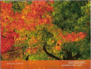 Orange jacket Postcard autumn leaves