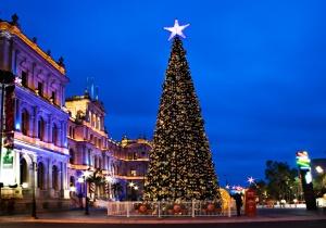Brisbane-christmas-tree
