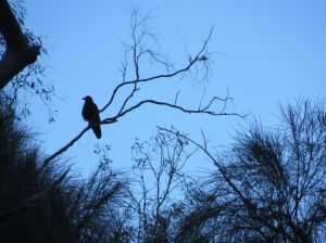 raven 20th oct