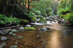 Liffey_River,_Liffey,_Tasmania