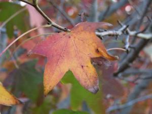 autumn-colours-at-aurora