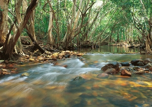 Park_Support_0034_TNQ_Tully_Gorge