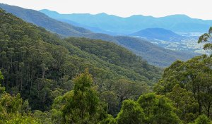 Pipers Lookout, South East Forest National Park